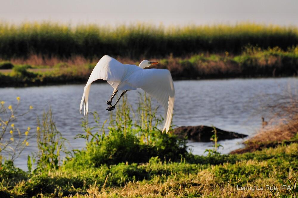 The Flight of the Egret 3 by Lenny La Rue, IPA