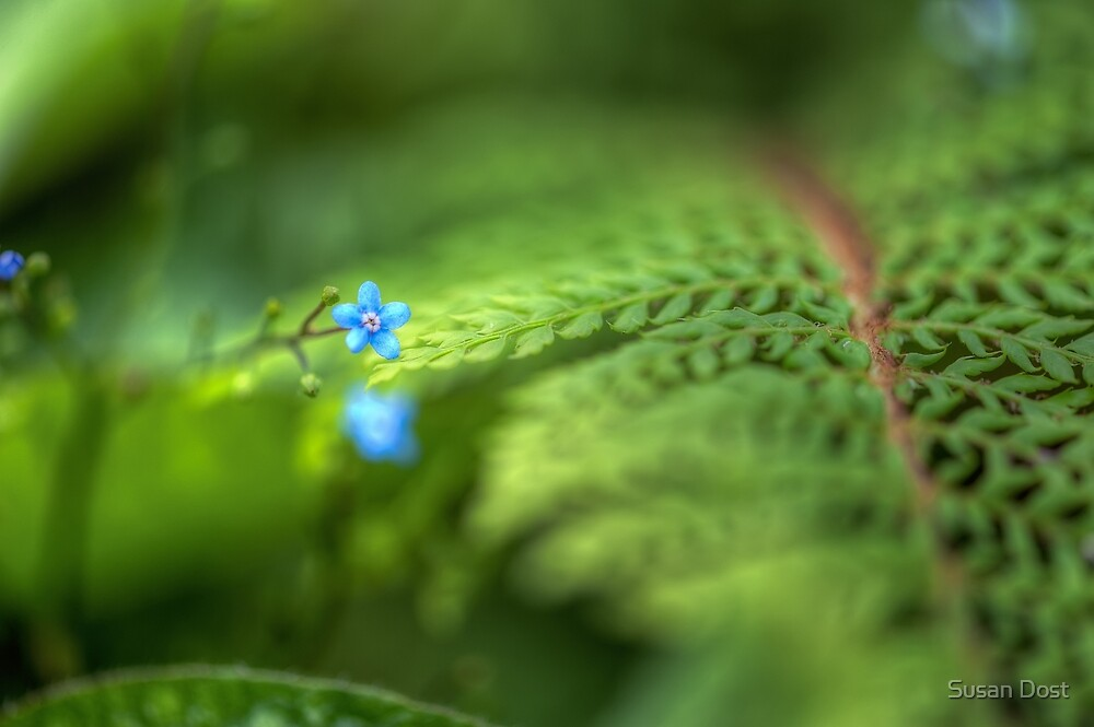 Forget Me Not & Fern by Susan Dost