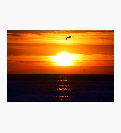 Sunset and Seagulls Photographic Print