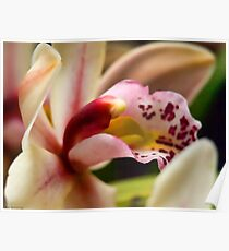 orchid bokeh Poster