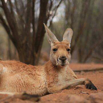 big red kangaroo by Sophosantos