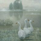 The Three Geese by stevemitchell