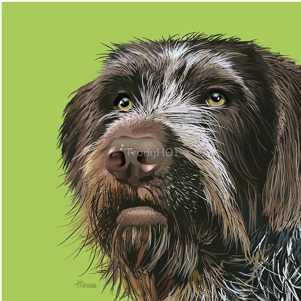 GWP German Wirehaired Pointer Dog by TrudyH01