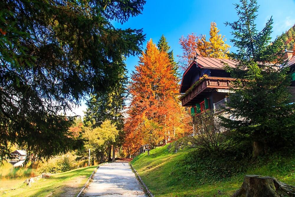trekking path in an autumn day in the alps by zakaz86
