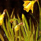 Golden Daffodils by Blended
