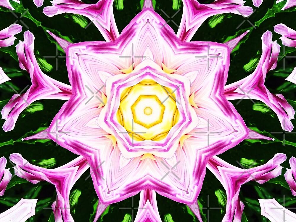 Dahlia Manipulation 3 by Karen Stahlros