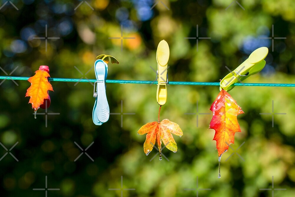 Leaves on a line by heidiannemorris