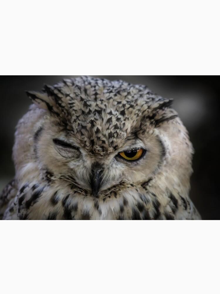 Winking Owl  by dawnmvd