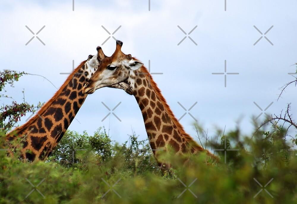 HUGS - THE GIRAFFE - kameelperd by Magriet Meintjes