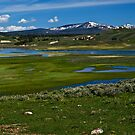 """~ Yellowstone National Parks """"Hayden Valley"""" by Tim Denny"""