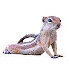 Desert Antelope Squirrel 2 by Peter B