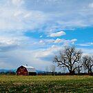 Red Barn In Spring by Pamela Hubbard