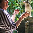 My Kookaburra friend and me by Bev Pascoe