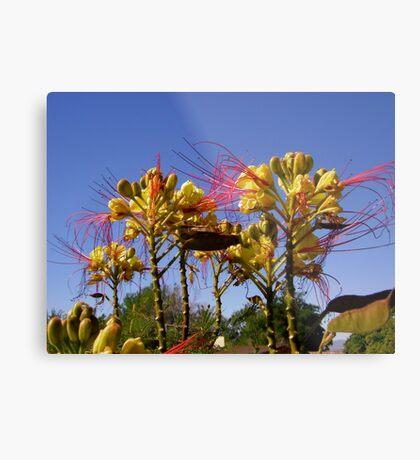 Bird of Paradise flowers Metal Print