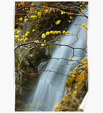 Waterfall with blossums - South Korea Poster