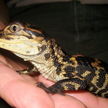 Baby Gator by venny