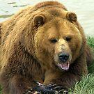 Big Bear by Rhonda  Thomassen
