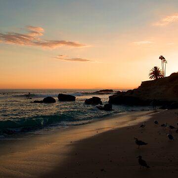 Laguna Beach Seagulls in Paradise by DianaG