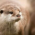 *otter* by funkymarmalade