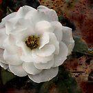 Rusty Rose by Jerri Johnson