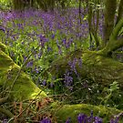 Bluebell Wood 4 by SimplyScene
