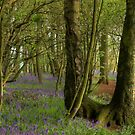 Bluebell Wood Pathway by SimplyScene