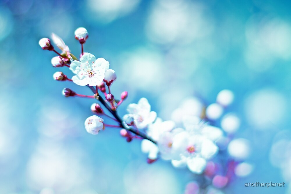 A taste of spring by anotherplanet