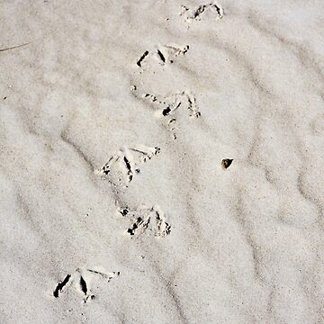 Footprints by mistered