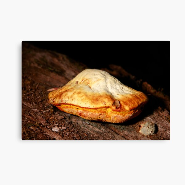 Chicken of the woods Canvas Print
