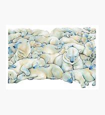 Polar Wall Photographic Print