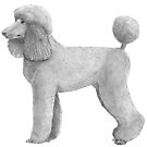 Standard poodle - abricot by doggyshop