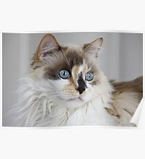 Blue-Eyed Mia Poster