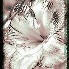 Amaryllis Vintage Enhancements by MotherNature