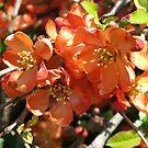 A Sign Of Spring by Linda Miller Gesualdo