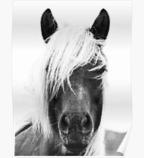 Wilde Pferde, Pferd drucken, Pferd Kunst, Wandkunst, Wanddekoration, Trendy print, Animal print, Interior Poster