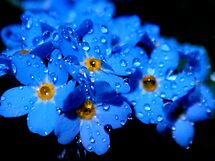 ..world of  drops .. by Eugenio