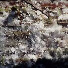 Forest Sun Rays in the Snow  #35 by Dawna Morton