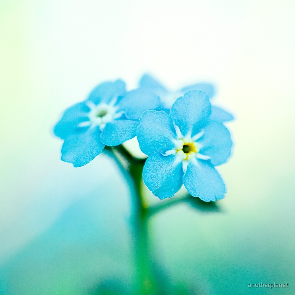 Forget me not by anotherplanet