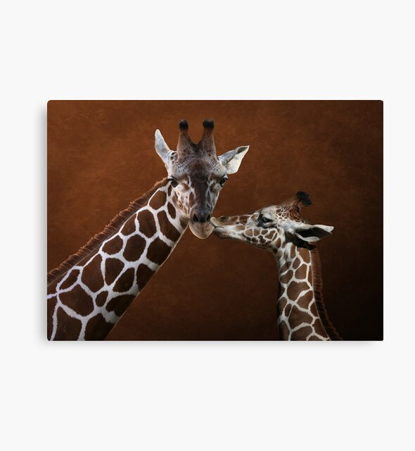 Studio Dalio - Love You Giraffes Canvas Print