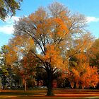 Autumn at Duke University by Chanel70