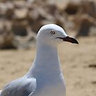Seagull watching me by kalaryder