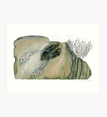 Mythical Flying Trilobite Fossil III Art Print