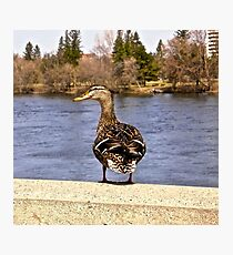Daft Duck - Ottawa, ON Canada Photographic Print