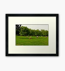 Green Park Lawn Chairs  Framed Print