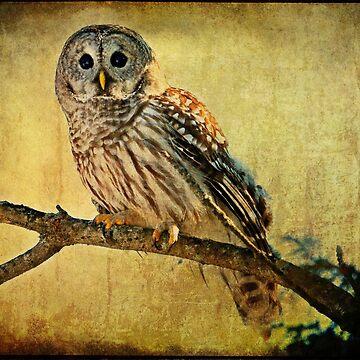 Solitude Stands While Wisdom Draws Near by locustgirl