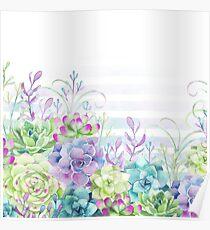 Summer Succulents Poster