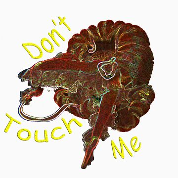 Don't Touch by DiveDJ