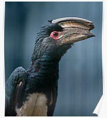 Speak to the Beak Poster