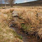 Moorland Stream by kernuak