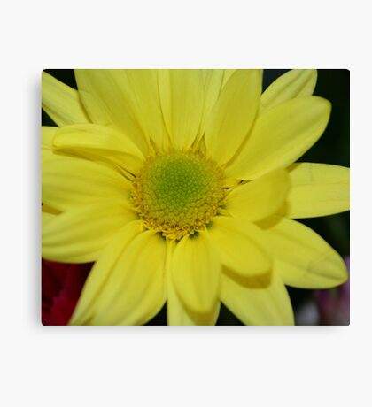Beauty In The Middle Canvas Print